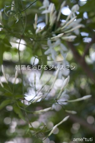 _DSC4197c.jpg