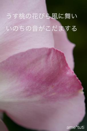 _DSC4250b.jpg